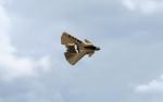 FT_MESA_Bravo_Flight.png