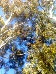 treed.jpg