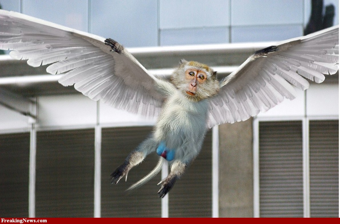 attachment - Flying monkey - Weird and Extreme