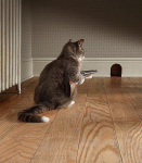 cat with gun ... here mousey mousey mousy.png