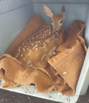 Oh_deer.jpg