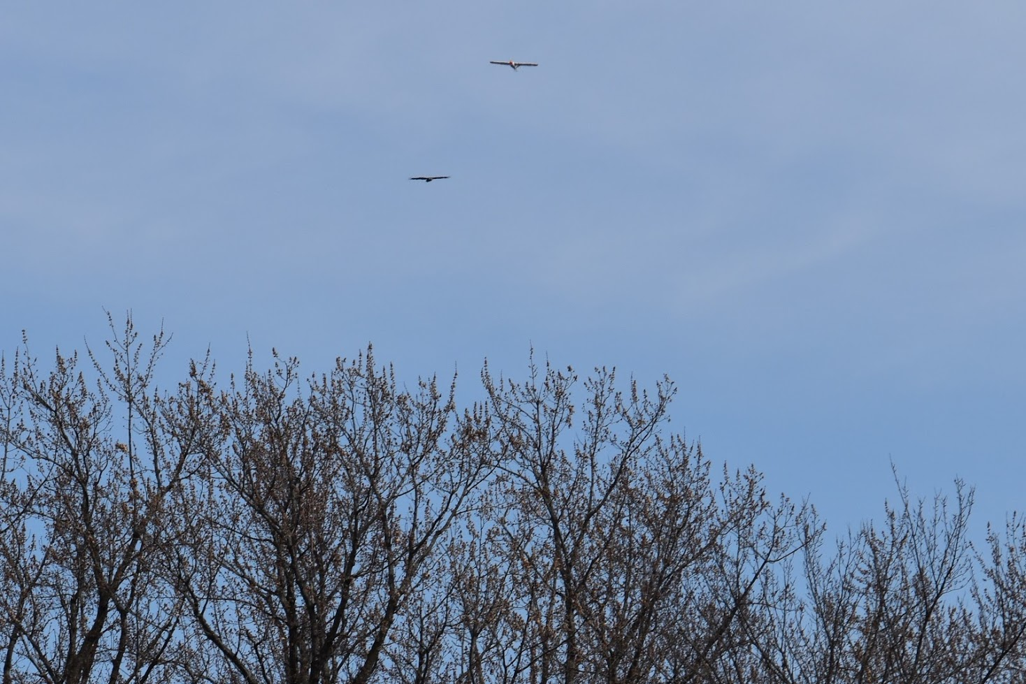 wingbird.jpg