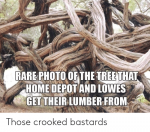 rare-photo-ofthe-treethat-home-depot-and-lowes-gettheir-lumber-48665531.png