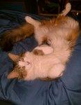 Gizzy killer attack Cat1.jpg