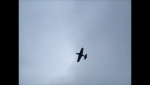 Mustang flyby2.png